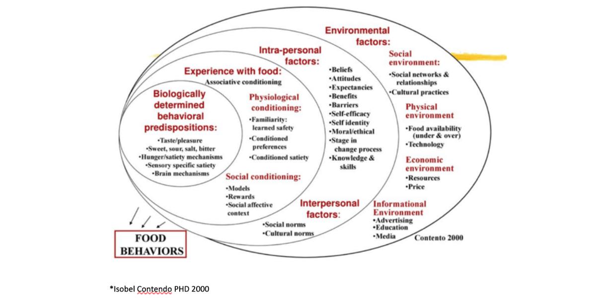 Diet-Brain-Diet-Mindset-Professional-image-2